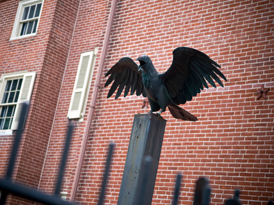 Raven at Edgar Allen Poe House. Photo: Getty
