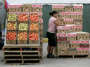 Boxes of tomatoes are for sale in an open air market in Immokalee, Fla. Photo: J. Pat