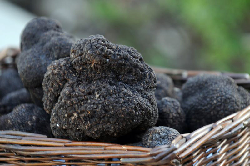 Truffles: Napa and Sonoma Counties may be a hot spot for black truffle cultivation. Photo: Janna Waldinger/Art & Clarity
