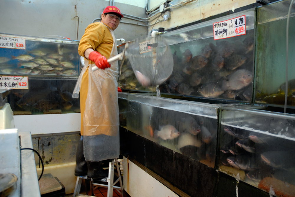 Buy a live fish in oakland chinatown for a traditional for Oriental fish market