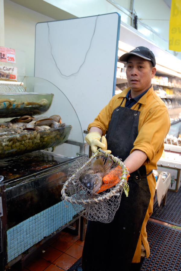 Gopher fish in net at E&F Market in Oakland Chinatown. Photo: Wendy Goodfriend