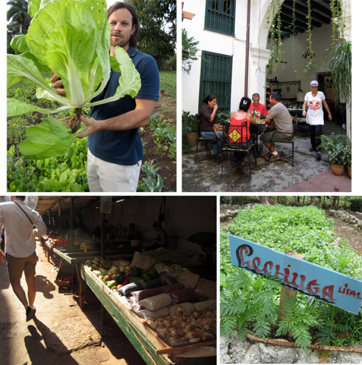 Snapshots from Cuba's farm and food scene. Photos: Varun Mehra