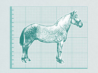 China's Horses May End Up In Russia's Kabobs
