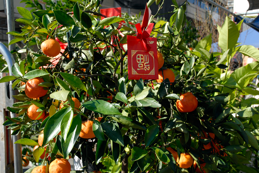 Tangerine tree at Oakland Chinatown Bazaar. Photo: Wendy Goodfriend