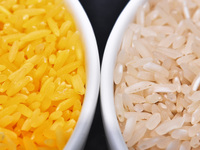 In A Grain Of Golden Rice, A World Of Controversy Over GMO Foods
