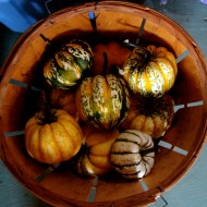 "Heirloom winter squash ""Carnival"" Photo courtesy Gauchito Hill Farm"