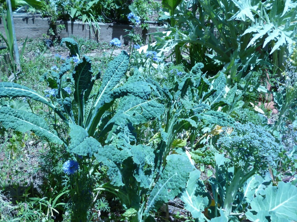 Kale, Broccoli, Artichoke, Blue Flowers