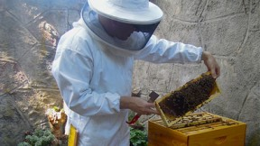Heard the Buzz on Backyard Beekeeping?