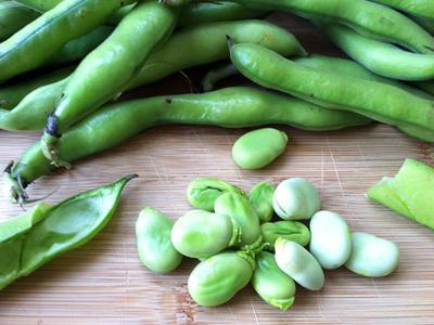 Fava-Bean Crostini