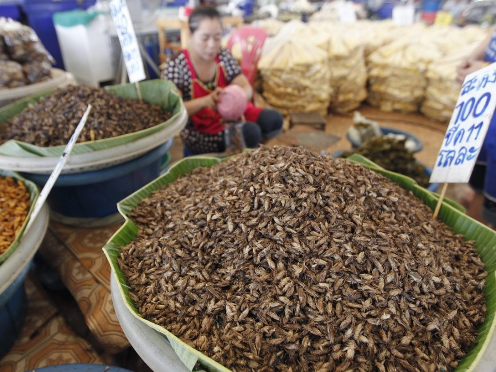 A vendor sells edible insects at Talad Thai market on the outskirts of Bangkok. The most popular method of preparation is to deep-fry crickets in oil and then sprinkle them with lemongrass slivers and chilis. Photo: NARONG SANGNAK/EPA /Landov