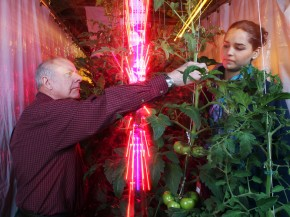 Cary Mitchell and Celina Gomez, of Purdue University, harvest tomatoes grown next to a tower of blue and red LEDs. Photo: Courtesy of Purdue Agricultural Communication photo/Tom Campbell
