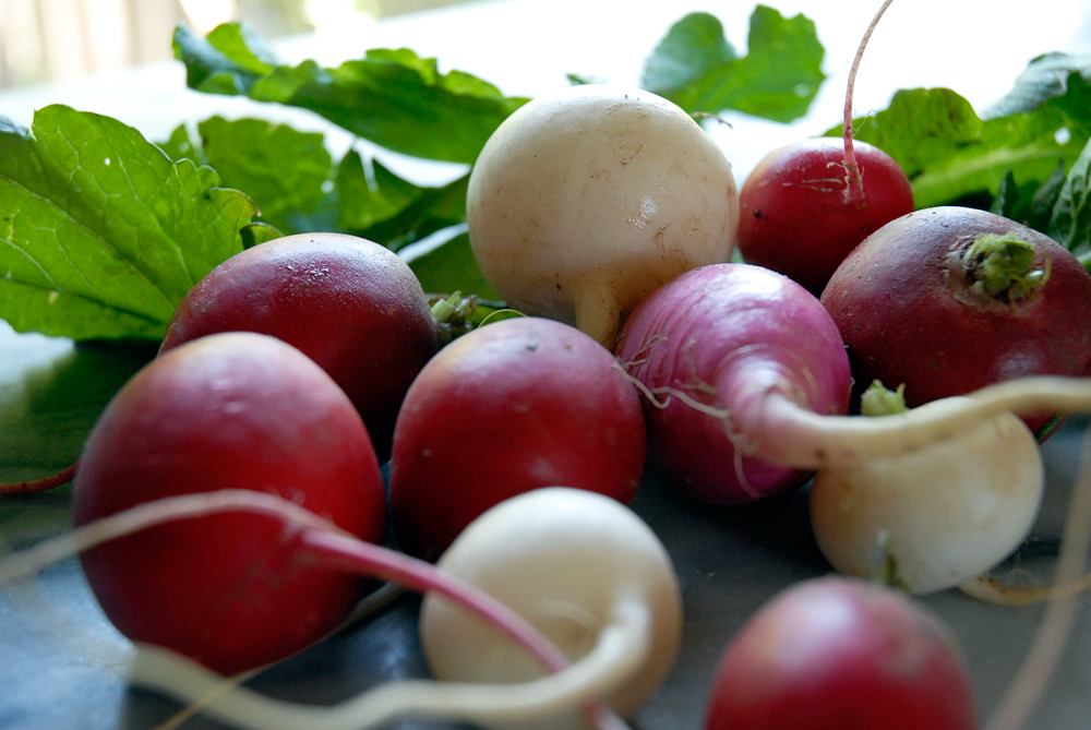 Radishes. Photo: Wendy Goodfriend