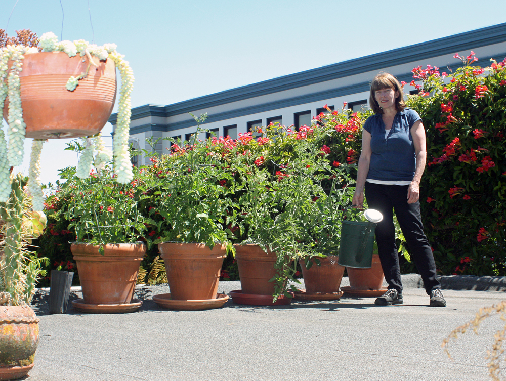 Eanes showing off tomatoes planted in her rooftop garden in Bernal Heights. Photo: Tilde Herrera