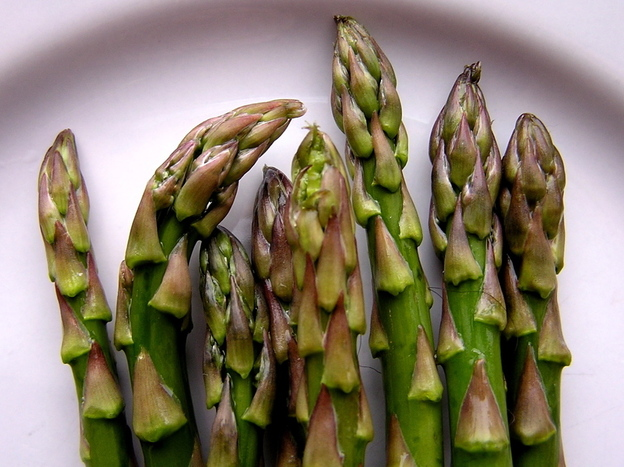 In a recent study, rats that munched on asparagus saw their blood pressure drop. Photo: Muffet/Flickr