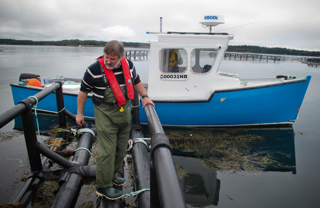Thierry Chopin from the University of New Brunswick examines a raft that holds strings of seaweed. The seaweed grows around pens of farmed salmon and soaks up some of the nutrients that would otherwise pollute the Bay of Fundy. Photo: Richard Harris/NPR