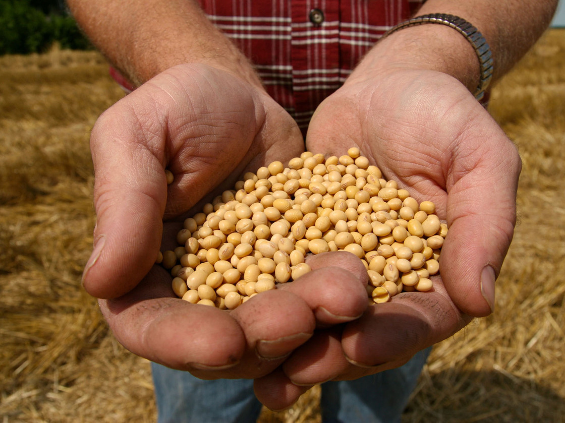 A farmer holds Monsanto's Roundup Ready soybean seeds at his family farm in Bunceton, Mo. Photo: Dan Gill/AP