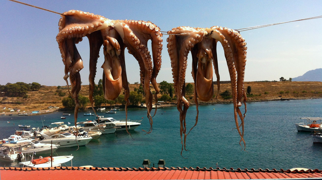 Mastering A Sea Monster: From Greece, A Lesson In Grilling Octopus