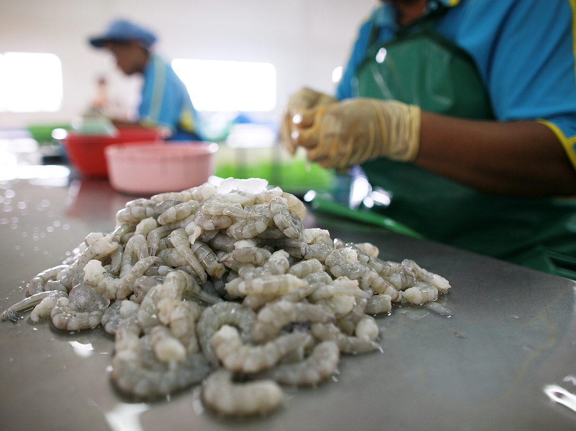 Workers process shrimp at a factory in Thailand in 2009. Photo: Chumsak Kanoknan/Getty Images