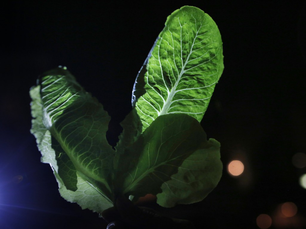 Researchers at Rice University conducted lab studies using light-dark cycles to try to coax more beneficial compounds out of fruits and vegetables. Photo: Heather Rousseau/NPR