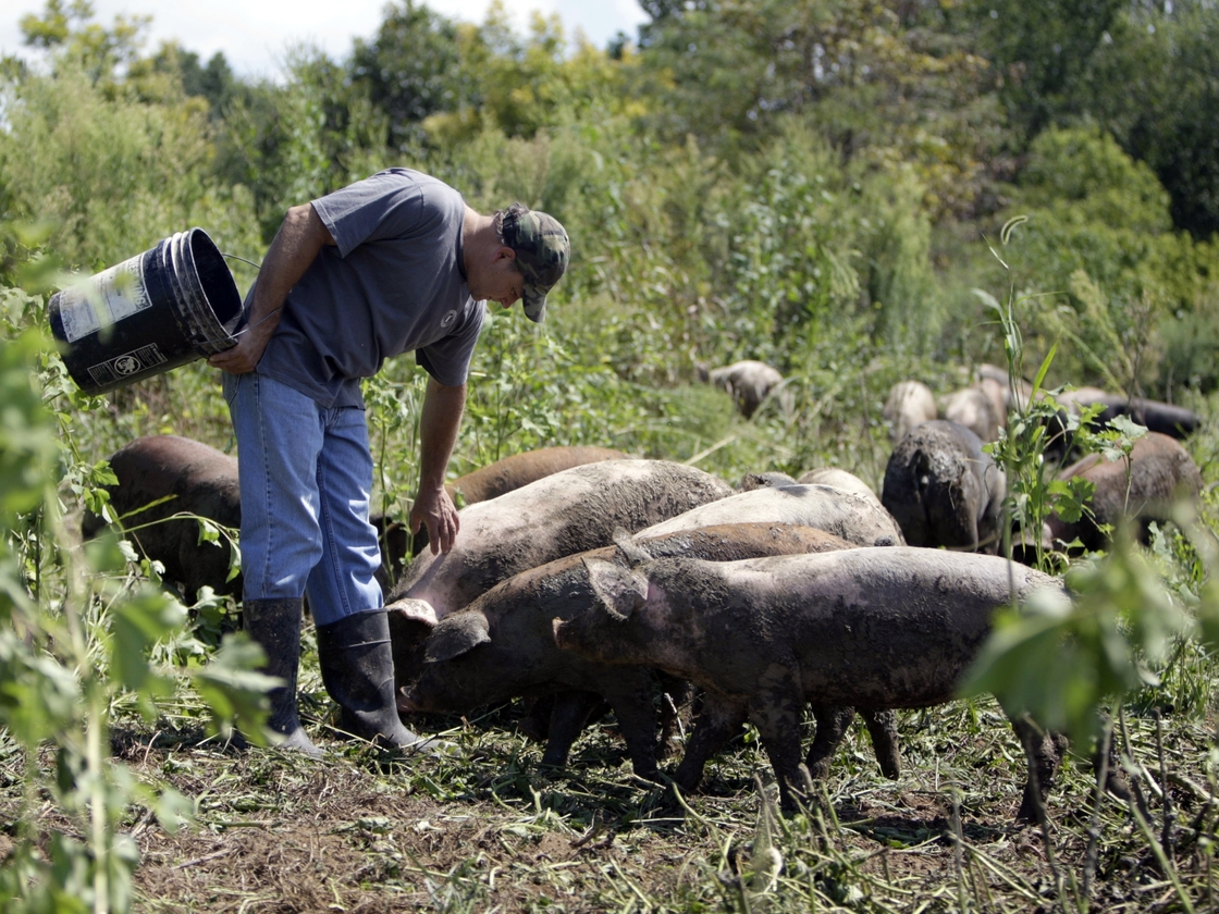 Russ Kremer with some of his hogs on his farm in Frankenstein, Mo., in 2009. Instead of buying conventional feed, Kremer grazes his hogs in a pasture, and grows grains and legumes for them. Photo: Jeff Roberson /AP