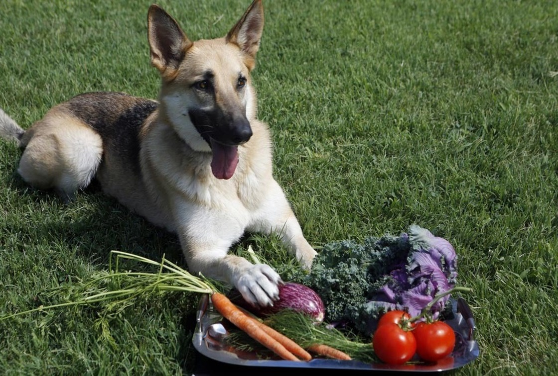 Producers of farm-to-dog-bowl food say the concept is more about locavorism and sustainability than about pampering pooches. Photo: Heather Rousseau/NPR