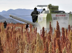 A combine harverster at work in a quinoa field in Pukara, southern Bolivia, in March. Bolivia produces 70 percent of the world's quinoa. Photo: Aizar Raldes/AFP/Getty Images