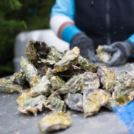 Woodhouse Fish Co. serving Drakes Bay Oysters