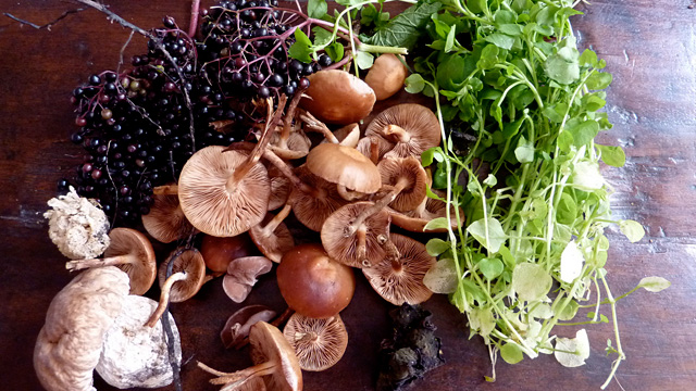 Foraged mushrooms. Photo:  kattebelletje/Flickr