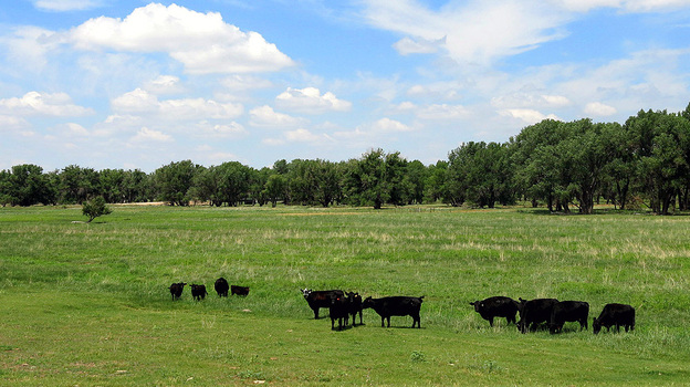 Ecologists Turn To Planned Grazing To Revive Grassland Soil