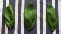 Getting Past Pesto to Re-Imagine Basil