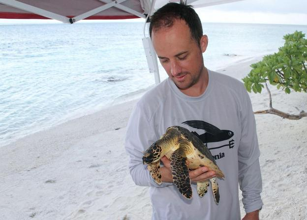 Ecologist Kyle Van Houtan in the field with a wild hawksbill sea turtle. Van Houtan began reading old Hawaiian menus in search of information about the turtles but instead saw changes in fish consumption. Photo: Kyle Van Houtan/NOAA