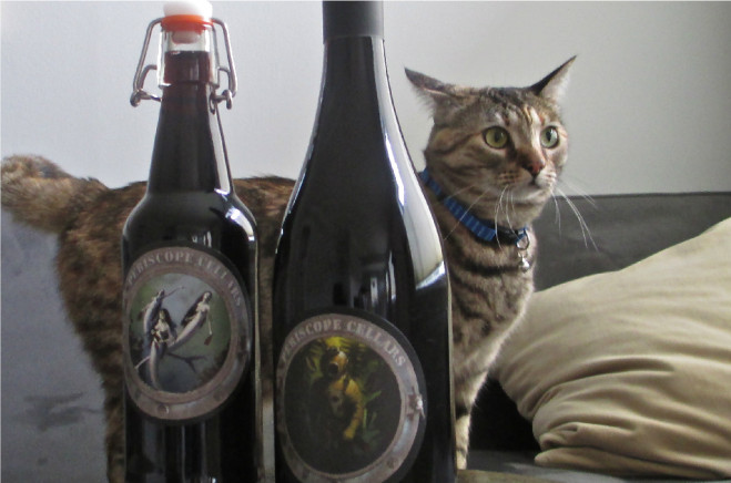 The house cat at Periscope Cellars enjoys wine too. Photo: Granate Sosnoff