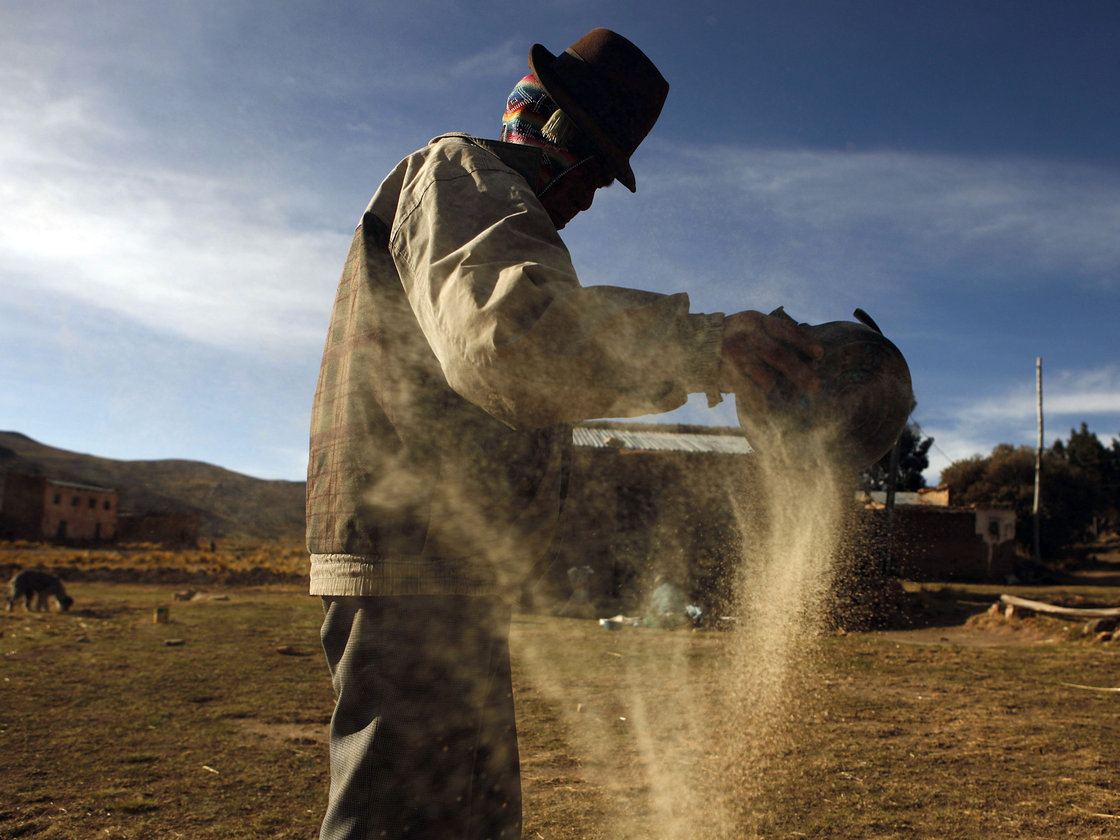 A man cleans quinoa grain in Pacoma, Bolivia. Photo: Juan Karita/AP