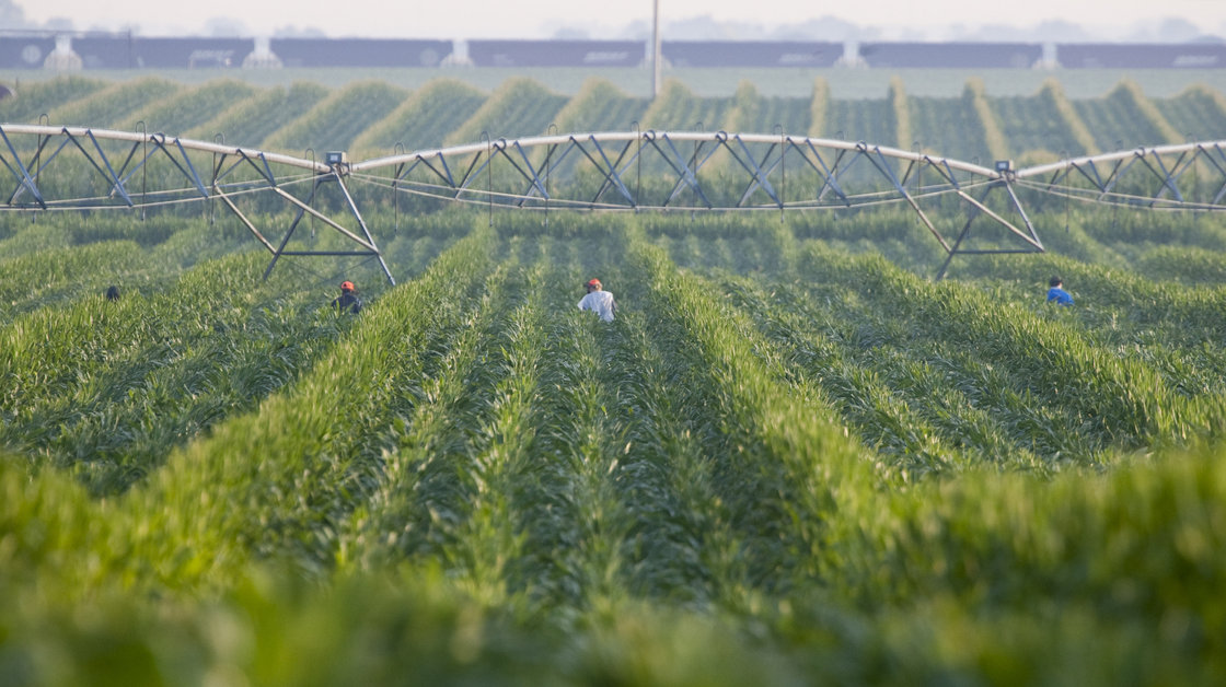 An irrigation pivot waters a corn field in Nebraska. Many farmers in Nebraska and Kansas rely on irrigation to water their corn fields. But the underground aquifer they draw from will run dry. Photo: Nati Harnik/AP
