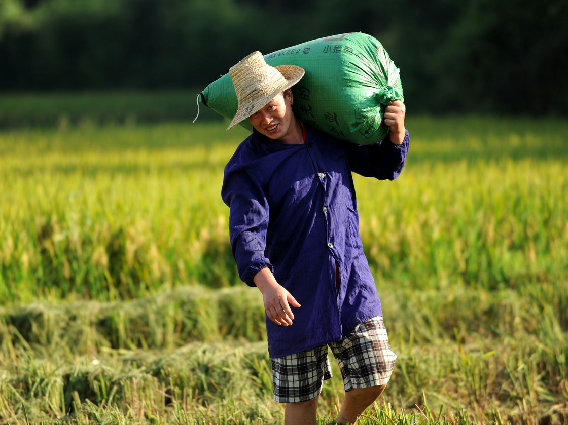 A farmer carries a bag of rice in China's Jiangxi Province in July 2013. Photo: ZHOU KE/Xinhua /Landov