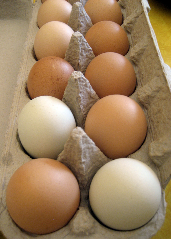 Full Belly Farm Pastured Eggs. Photo: Laura McCamy