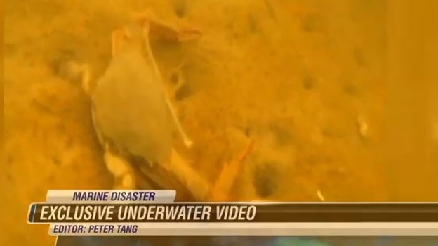 An image from video shot by diver Roger White for Hawaii News Now shows how the molasses spill has affected the water in part of Honolulu Harbor and killed many creatures. Photo: Hawaii News Now