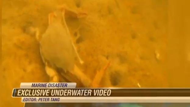 Massive Molasses Spill Devastates Honolulu Marine Life