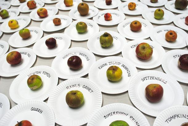 Apples from last year's National Heirloom Exposition. Photo: CUESA