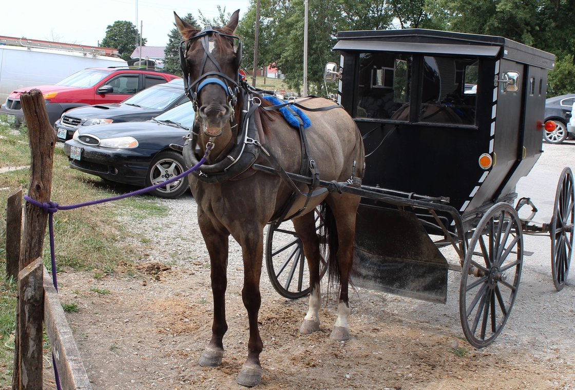 Jamesport has the largest Amish community in Missouri, and horses pulling buggies often park alongside cars. Horse owners in the state are divided over whether to allow horses to be killed for meat in the U.S. Photo: Frank Morris for NPR