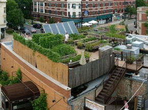 Uncommon Ground, a certified green restaurant in Chicago, hosts an organic farm on its rooftop. Photo: Zoran Orlic of Zero Studio Photography/Uncommon Ground