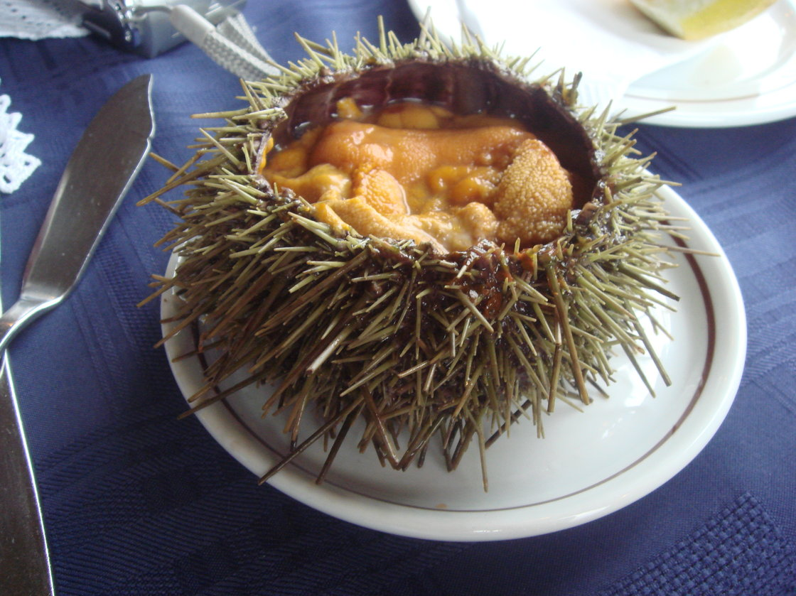 Sea urchins are considered a culinary delicacy, but demand can't keep up with supply. Photo: Aizat Faiz/Flickr