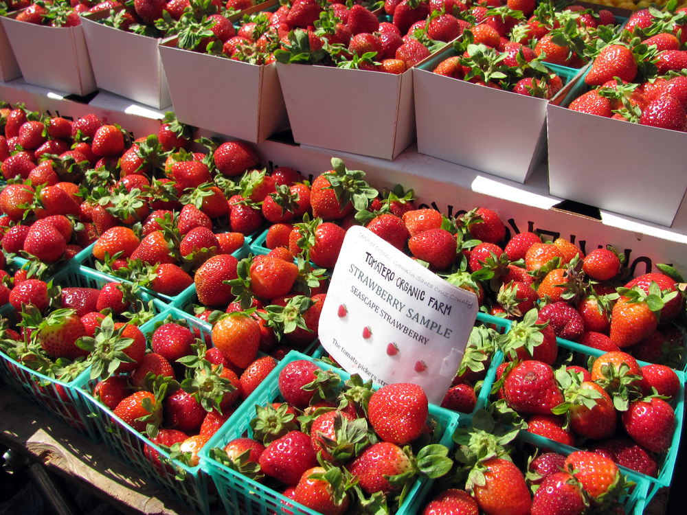 Tomatero Farm Strawberries. Photo: Laura McCamy