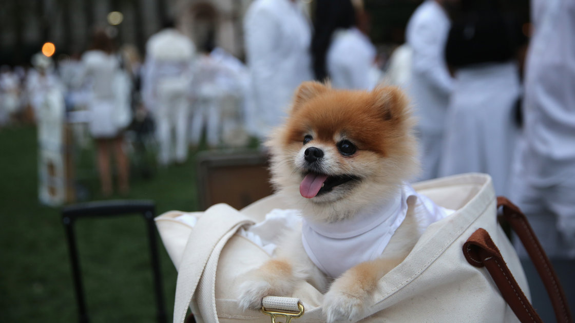 Even four-legged guests observed the chic, strictly white dress code at Wednesday's event. Photo: John Moore/Getty Images
