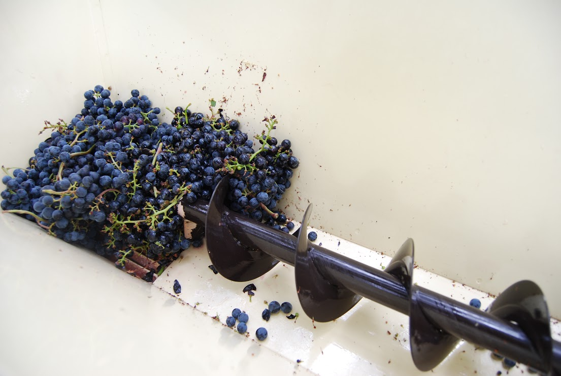 A corkscrew-looking blade in the de-stemmer/crusher separates the stems from the grapes which fall into a bucket below. Photo: Lindsey Hoshaw