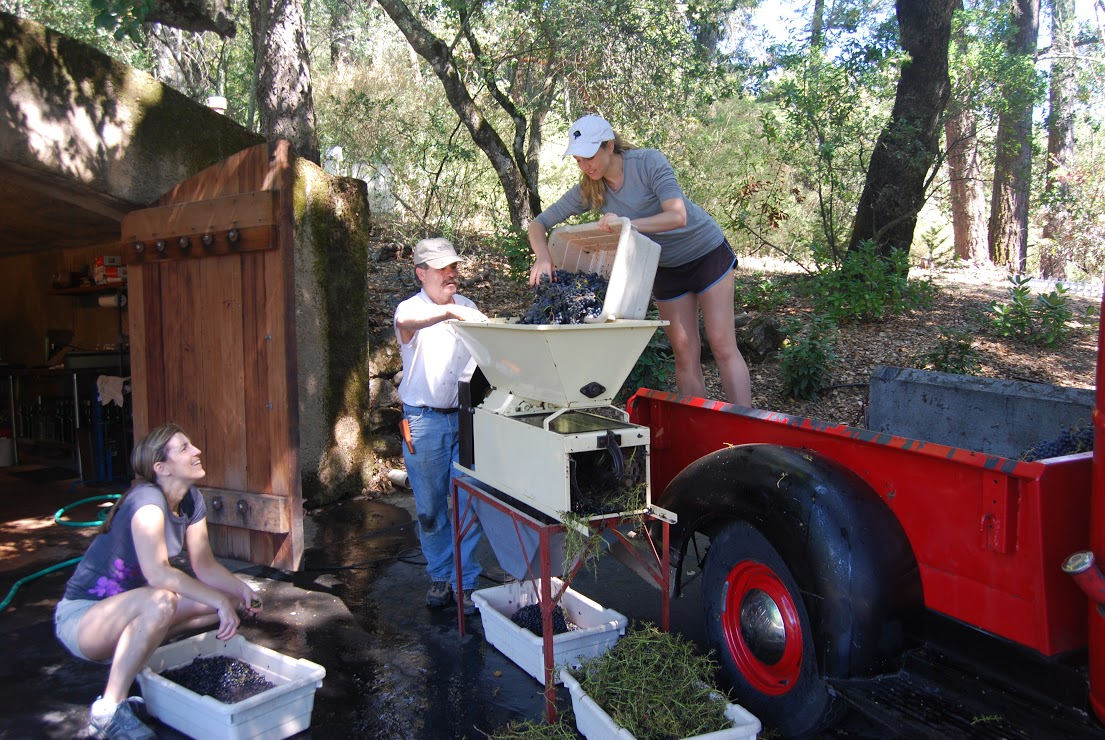 Dumping Cabernet Franc grapes into the de-stemmer/crusher before the juice gets ready for fermentation. Photo: Lisa Regalla