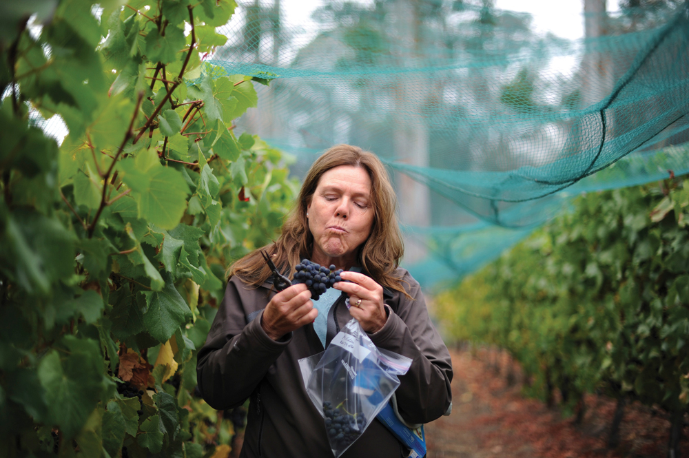 "Prudy Foxx of Corralitos (near Santa Cruz) has been nicknamed the ""grape whisperer, discovering neglected plantings, and matching grapes to the right winemaker. Photo: Ten Speed Press/Erik Castro"