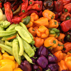 Assorted peppers. Photo: courtesy of CUESA