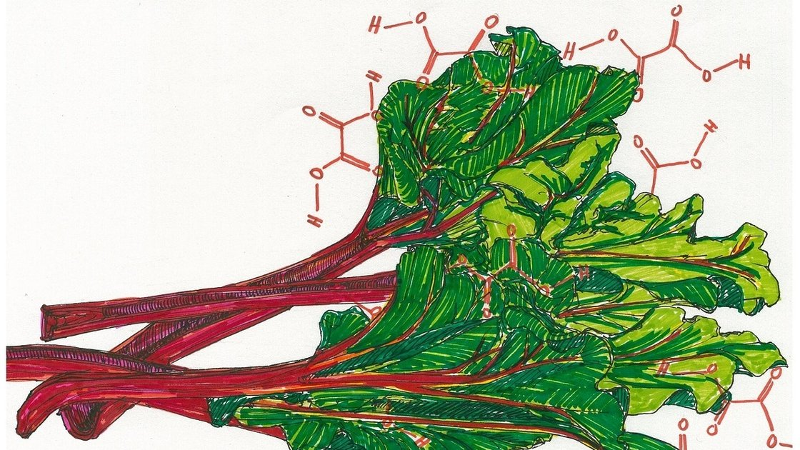Rhubarb: delicious with strawberry pie, but steer clear of the leaves. Illustration: Rae Ellen Bichell/NPR