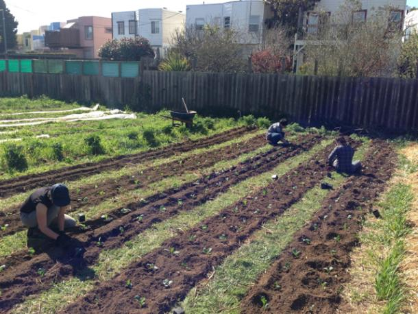 New California Law Breaks Ground for Urban Agriculture